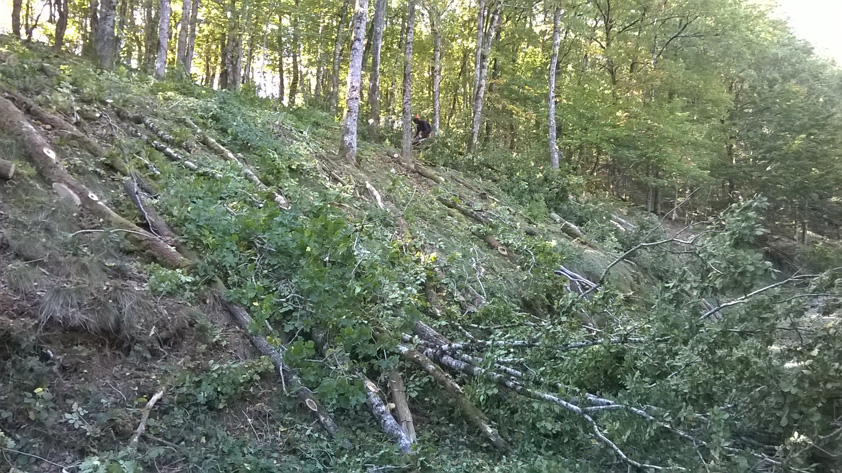 Exploitation et Gestion forestière- Abattage